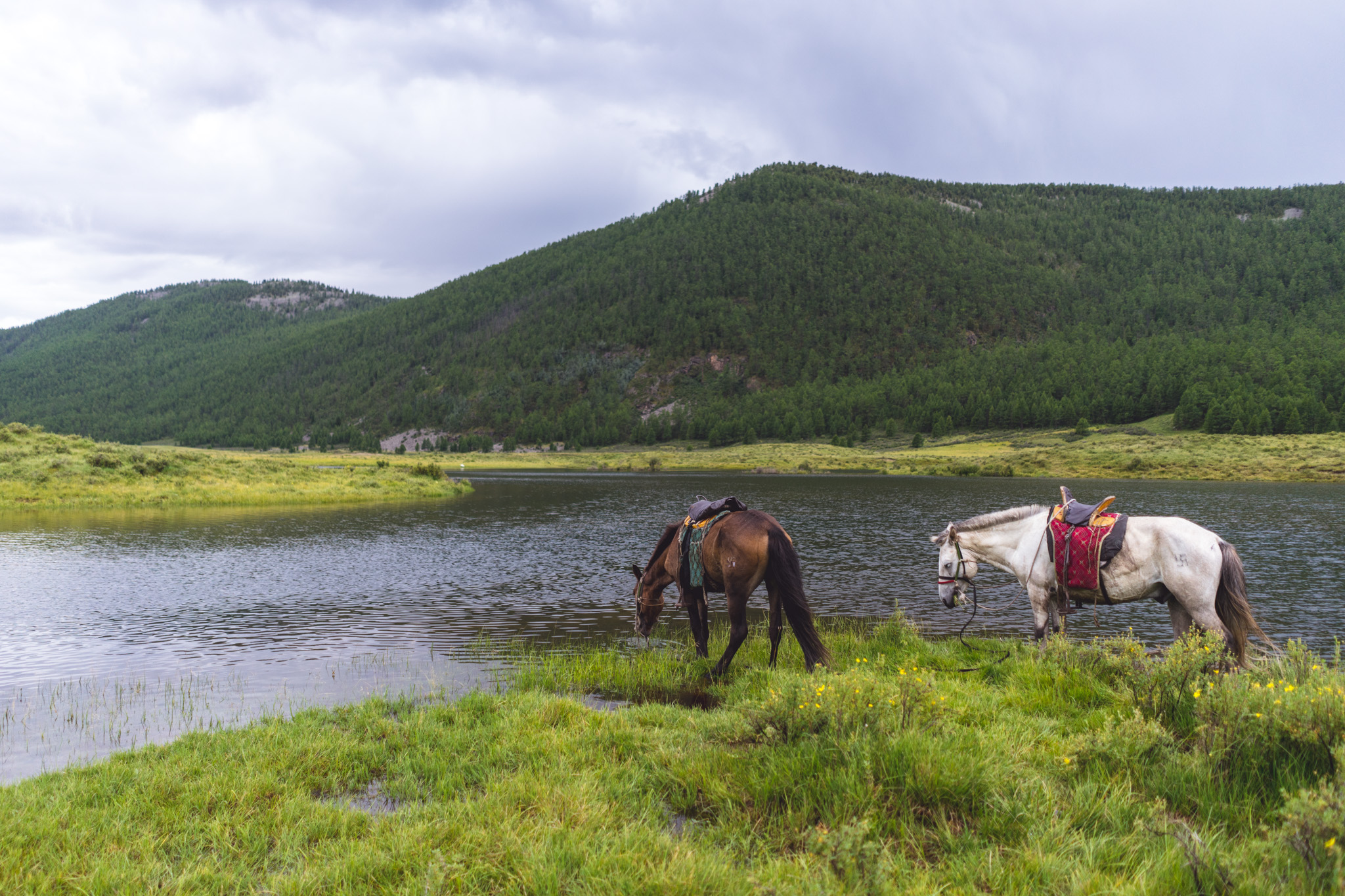 Quick water break while horseback riding in Mongolia's Orkhon Valley