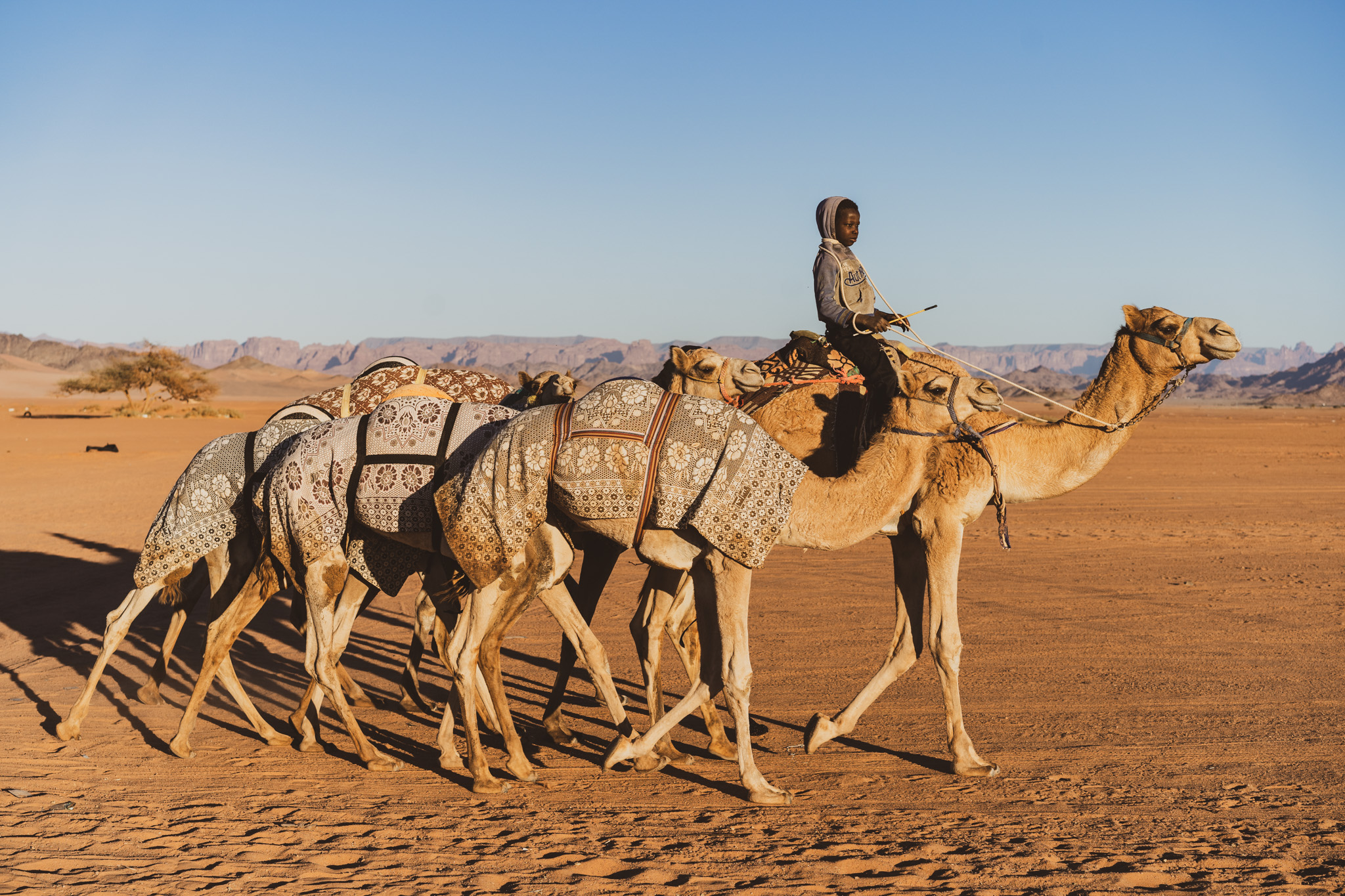 Camels are a pretty common sight while travelling in Saudi Arabia